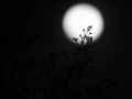 Lunar Eclipse night
